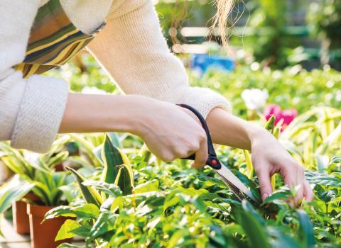 Building & Gardening