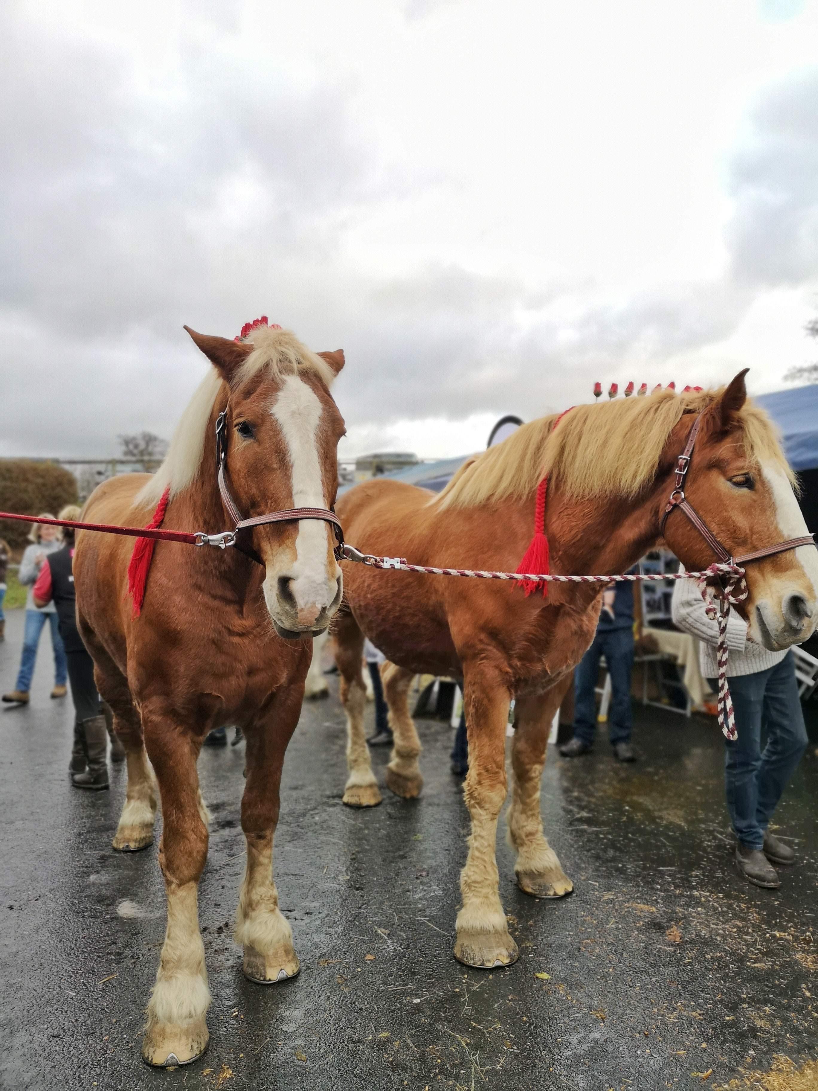 Equestrian Shopping Extra